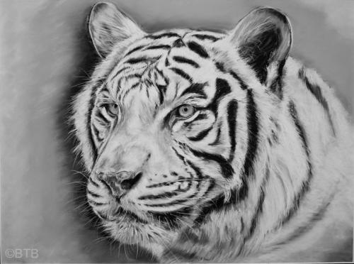 Tiger pastel